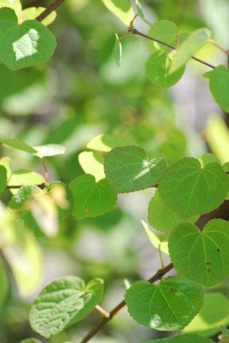 leaves4-4.jpg