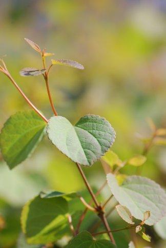 leaves4-6.jpg