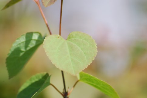 leaves4-7.jpg