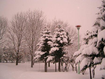 snow3-3.jpg