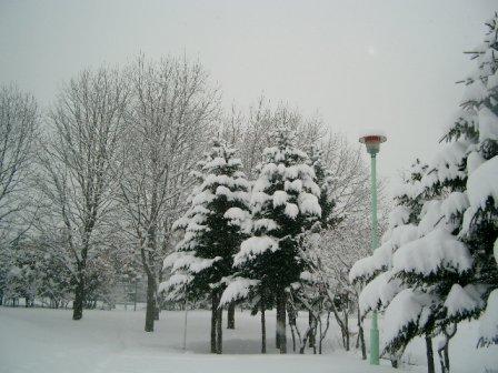 snow3-4.jpg