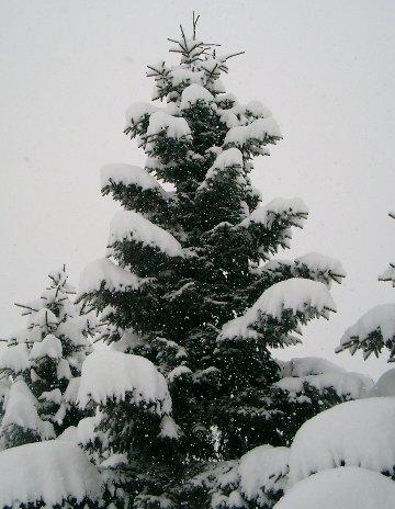 snow3-5.jpg