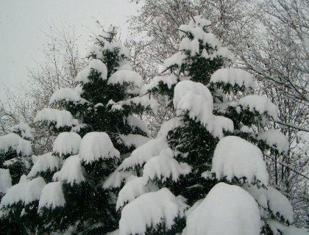 snow3-6.jpg
