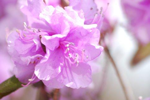 tsutsuji4-14.jpg