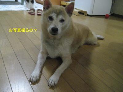 お写真_1