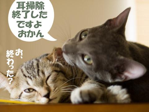 pac_ras33.jpg