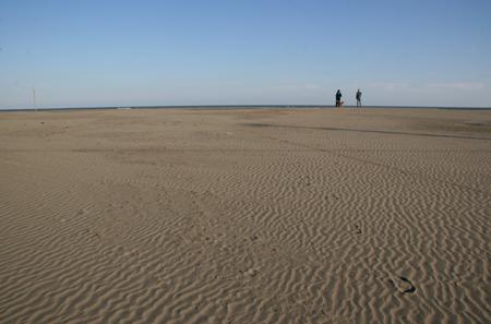 浜辺の散策