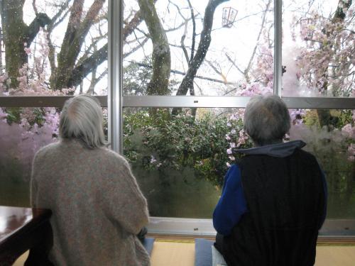 ・お茶屋さんから桜を眺める