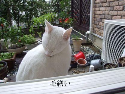shiro081006