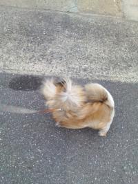 強風で散歩