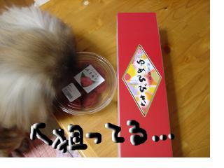 snap_nao114anzu85_200964164112.jpg
