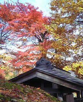 赤&黄色の紅葉(箱根・強羅公園)