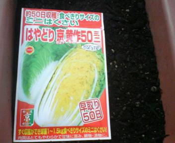 白菜8181