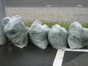 70ℓの袋でこんなにたくさん