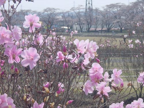 2009_0407AI.jpg