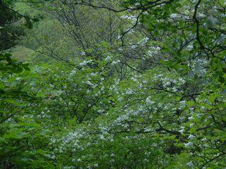 2009_0531AF.jpg