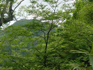2009_0616AH.jpg