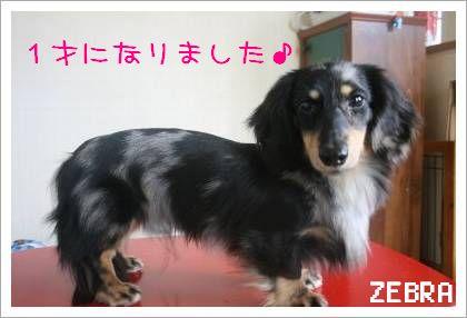 2_20080522140641.jpg