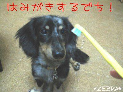 4_20080827234634.jpg