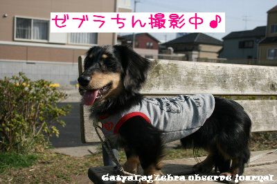 IMG_6519.jpg