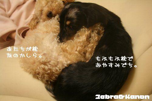 mofumofu1.jpg