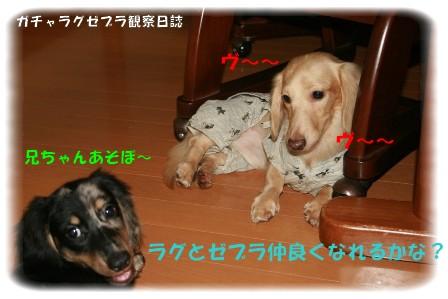 yama1003.jpg