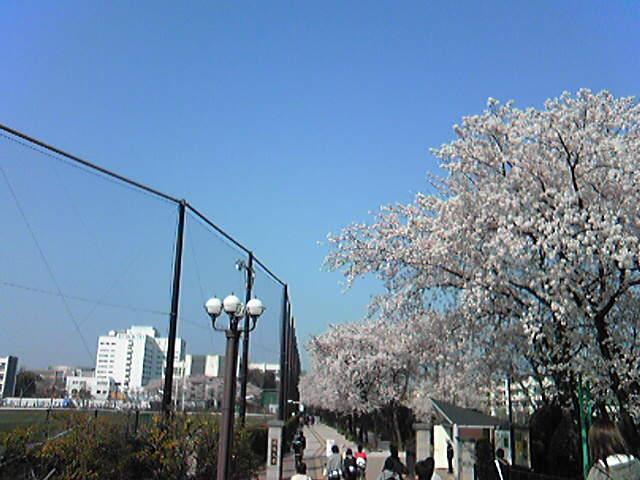 「さくら橋」の名にかけて桜木花道