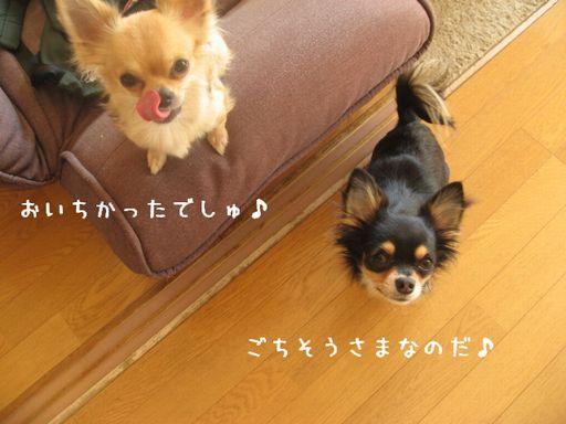 IMG_0868.jpg