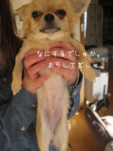 IMG_9618.jpg