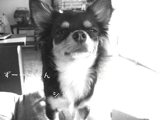 daizu.jpg