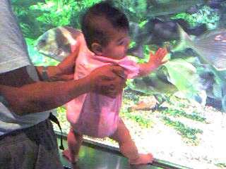 この魚食いたい。byなゆどん