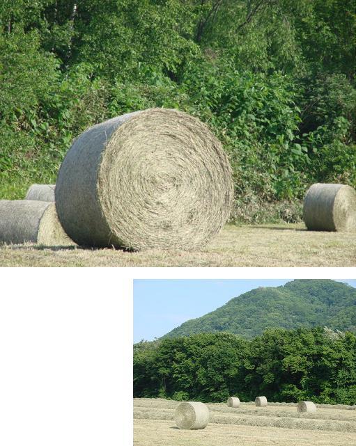 牧草のロール