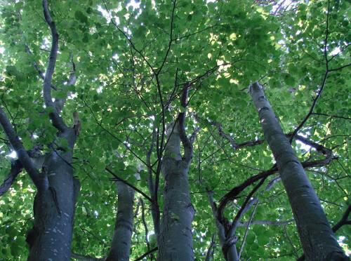 森林浴32