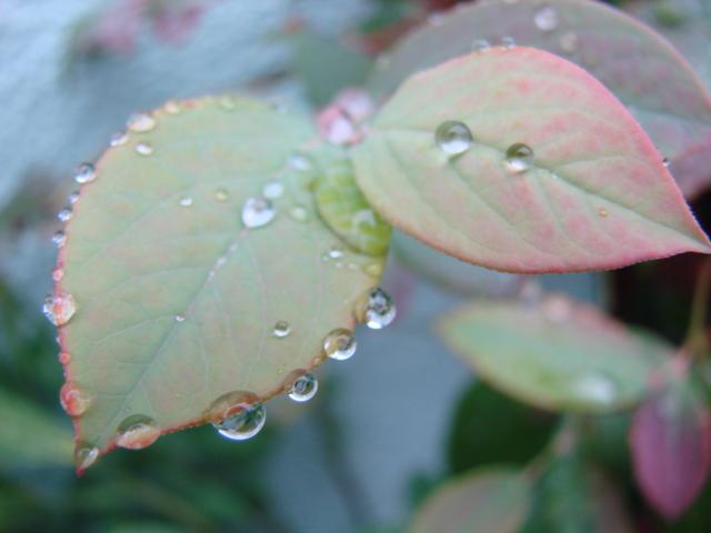 秋の雨 008