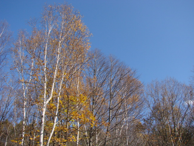 森へ 027