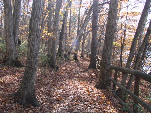 森へ 016