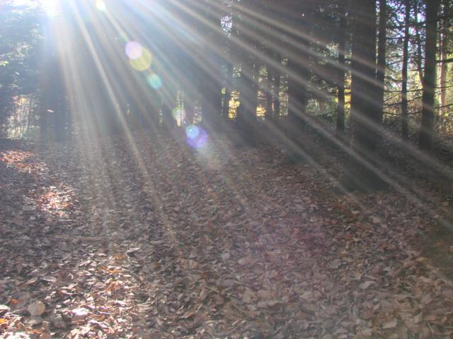 森へ 138