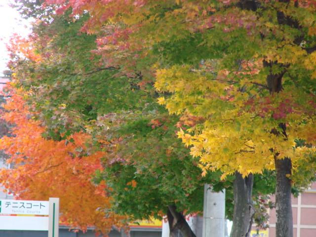 秋の空気 049