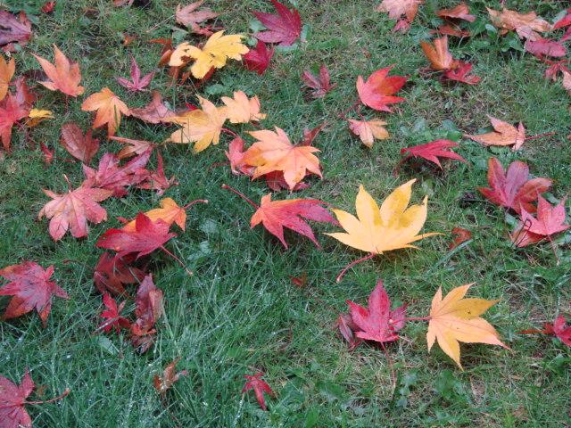 秋の雨 034