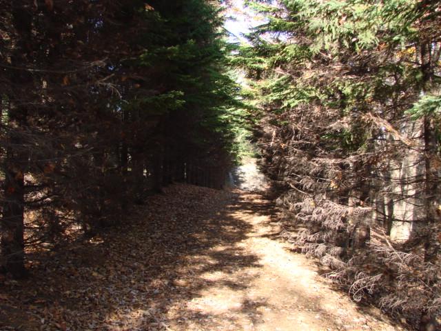 森へ 126