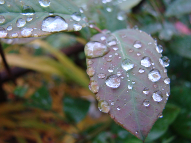 秋の雨 005