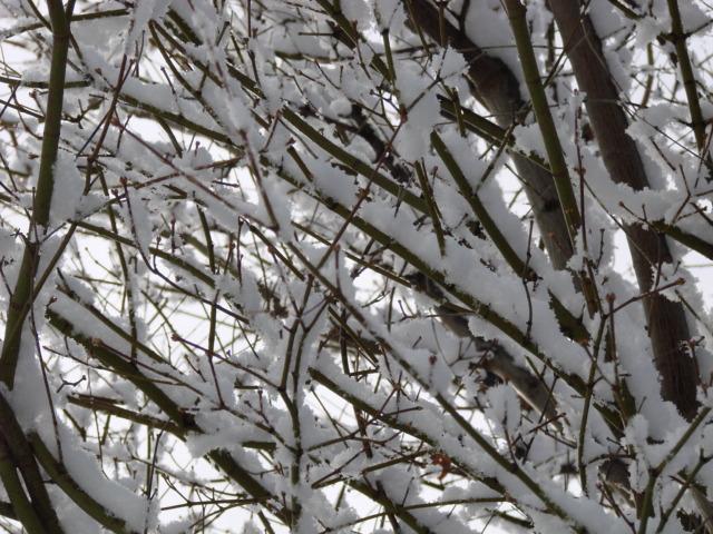 冬の日 005