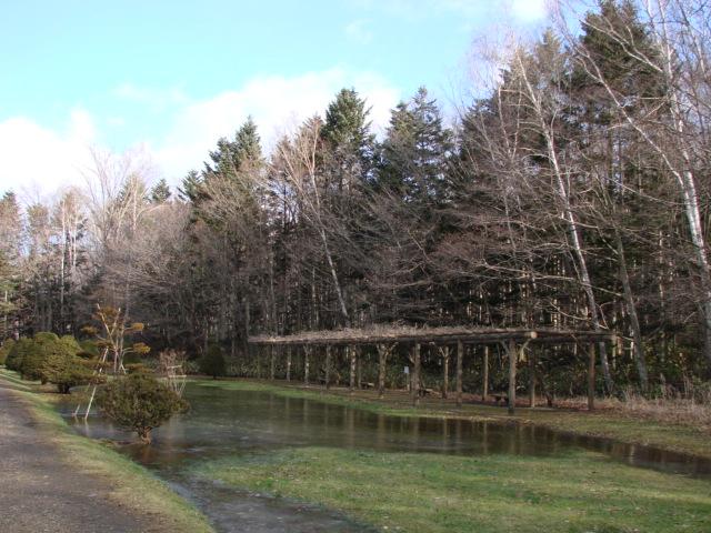 冬の森へ 033