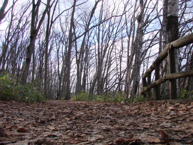 冬の森へ 035