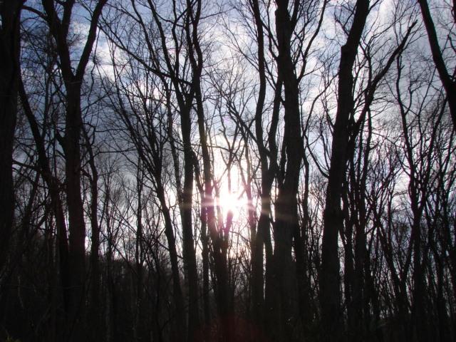 冬の森へ 036