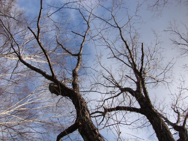 冬の森へ 049