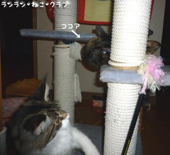 20080917cocomaro1.jpg
