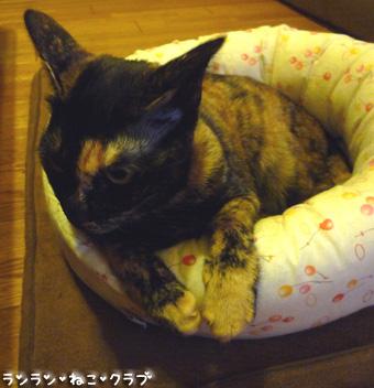 20080924cocoa3_2.jpg