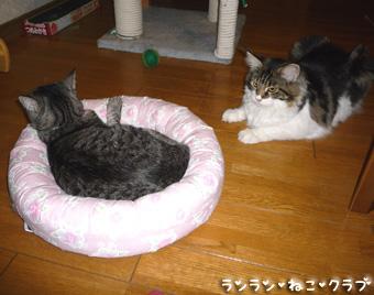 20081002guremaro1.jpg