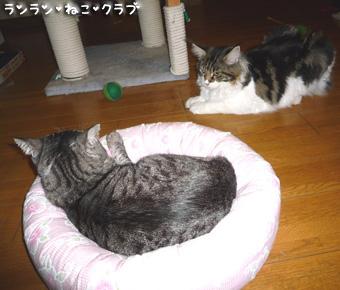 20081002guremaro2.jpg
